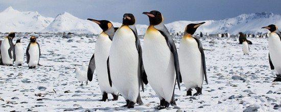 Penguin-update-09.05